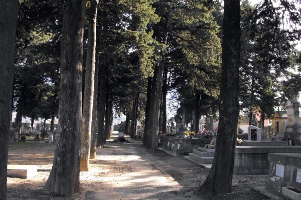 allée centrale du cimetière