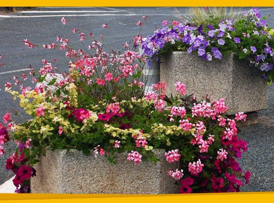 Adopte une jardinière à La Calmette
